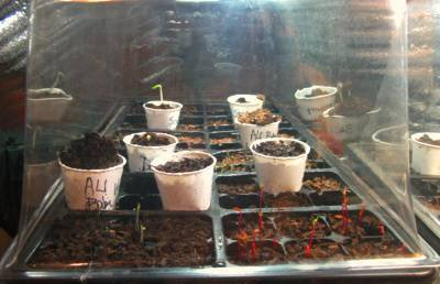 starting seedlings indoors