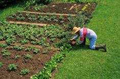 large vegetable garden