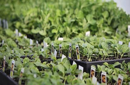 Transplanting Seedlings Essential Guide