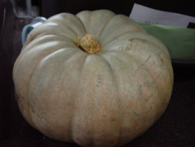 white pumpkin winter squash
