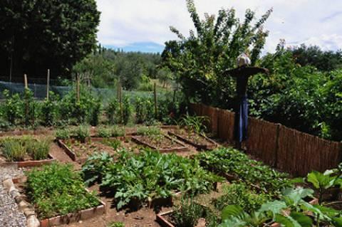 raised bed garden in Italy