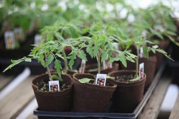 buying healthy seedlings