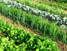 Beginner Gardening Learn Vegetable Gardening Basics