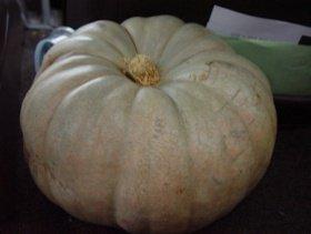 white pumpkin winter squash